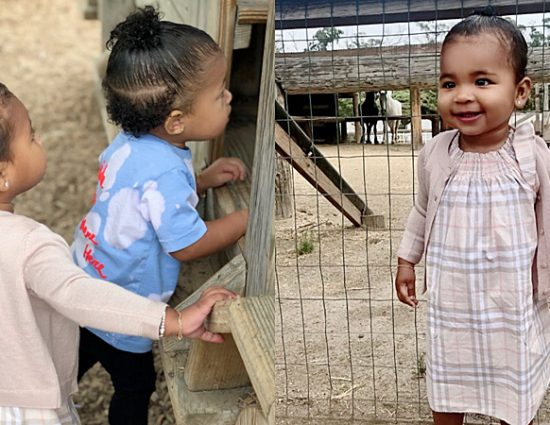 June 25, 2019: Stormi and True at a farm